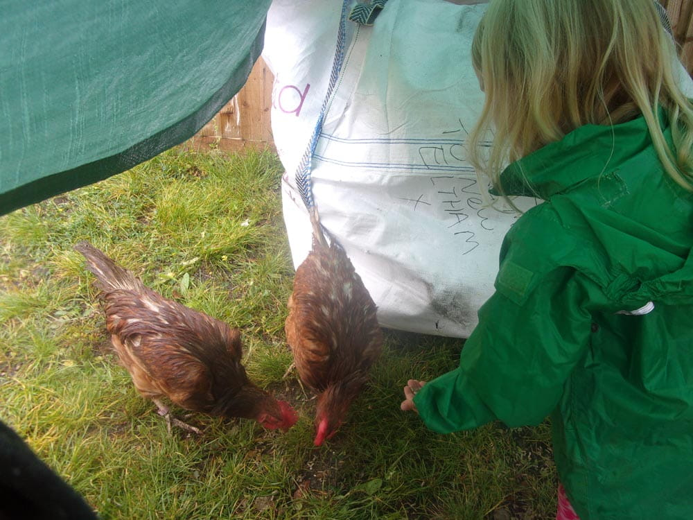 London nursery children interact with pet chickens