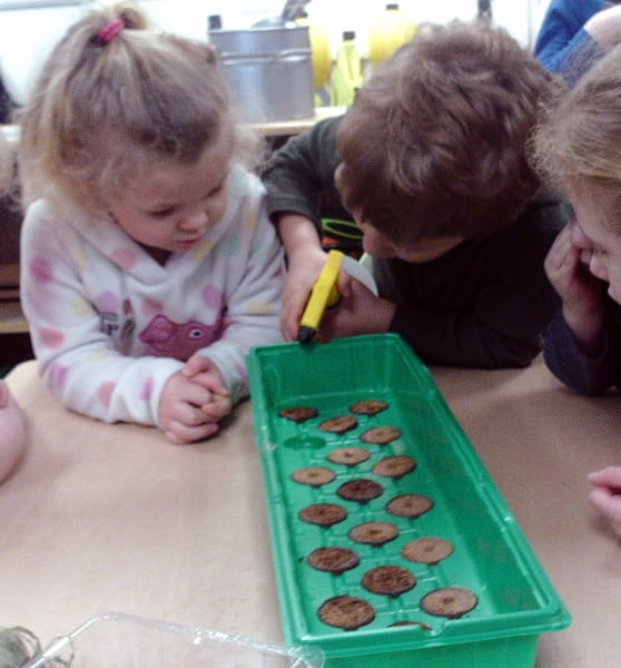 Growing Cress at Broadgreen Day Nursery and Preschool in Liverpool