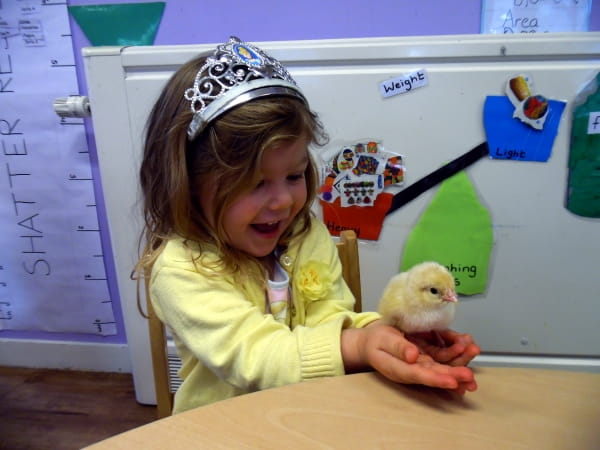 Englefield Green Day Nursery and Preschool observe eggs hatching