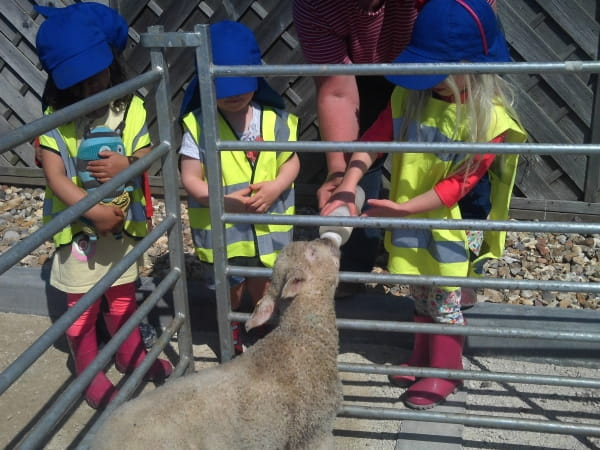 Talbot Woods Day Nursery and Preschool meet lambs at the farm