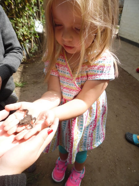 Englefield children discover toad on bug hunt
