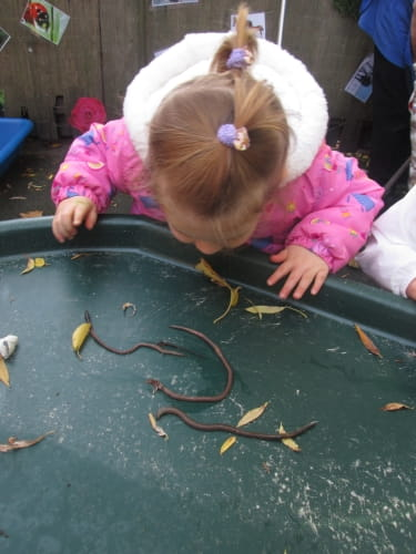 Crewe nursery children embrace insect hunt