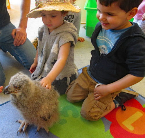 Summerfields children embrace owl visit